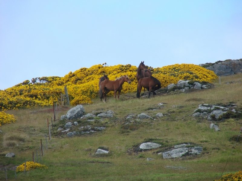 Horses Grazing near Government House