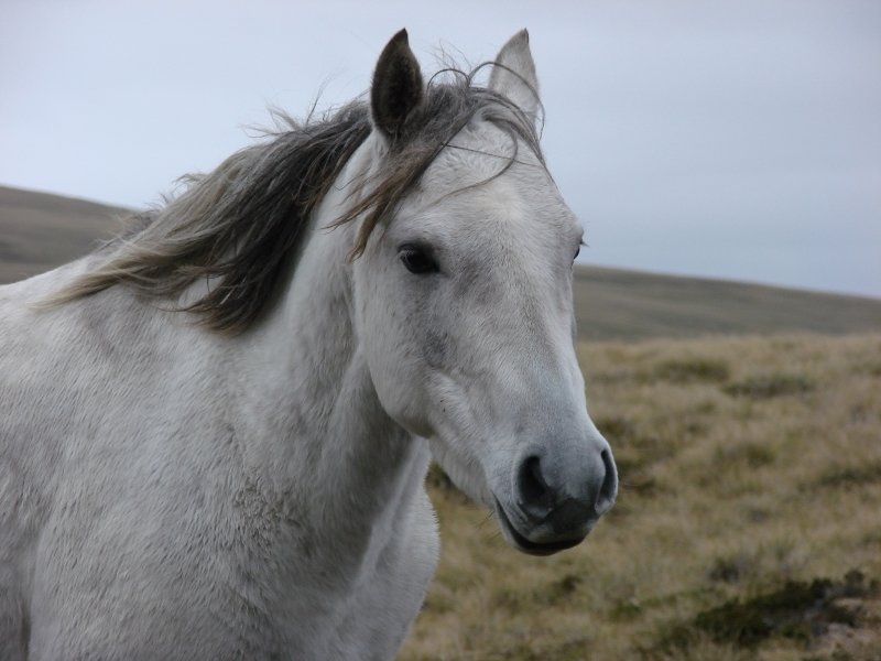 Horse at Mount Usborne