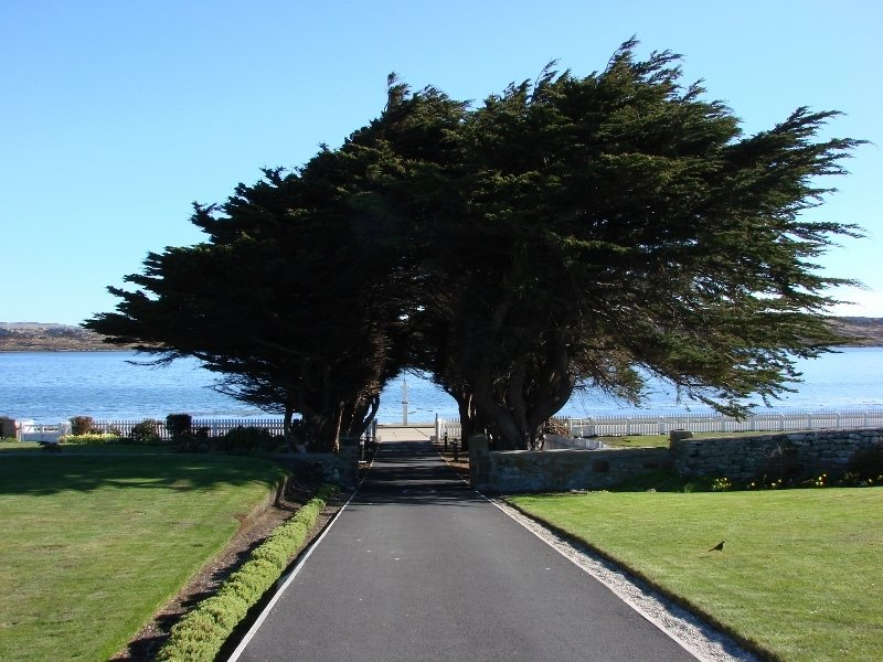 Macrocarpa Trees at Government House