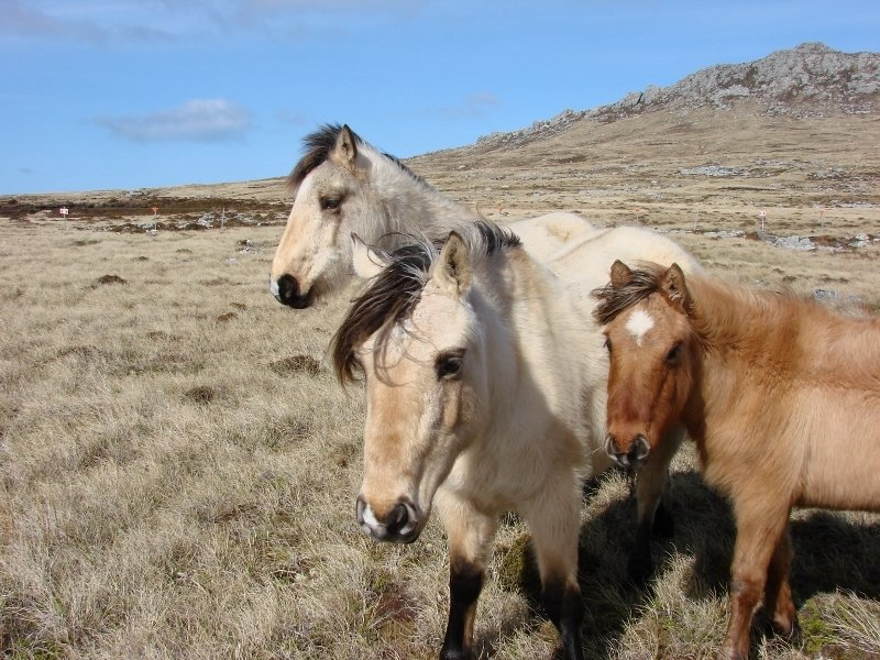 Horses Grazing near Tumbledown Mountain